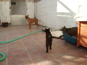 sukie nuevas y con gatos (1)