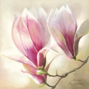 Magnolia-Liliflora-148080