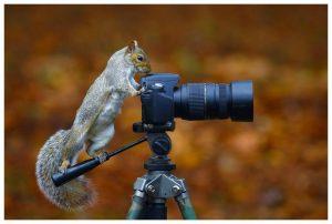 ces-animaux-aiment-appareils-photos-L-3VXFK2